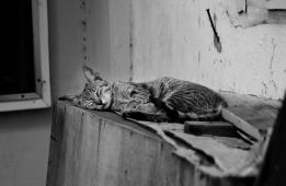 http://camerashyness.com/2013/01/04/day-4-sleep-in-heavenly-peace/