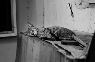https://camerashyness.com/2013/01/04/day-4-sleep-in-heavenly-peace/