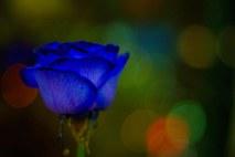 https://camerashyness.com/2013/02/14/day-45-blue-valentines/