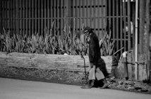 https://camerashyness.com/2013/02/19/day-50-night-walker/