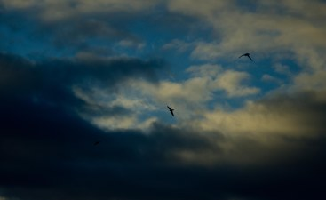 https://camerashyness.com/2013/04/03/day-93-three-birds/
