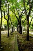 http://camerashyness.com/2013/07/07/day-188-right-path/