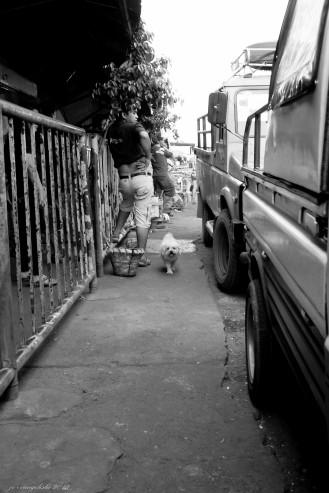 https://camerashyness.com/2013/10/06/day-279-puppy-love/