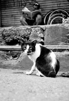 https://camerashyness.com/2013/11/23/day-327-staring-cat/