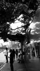 http://camerashyness.com/2013/11/16/day-320-zacchaeus/