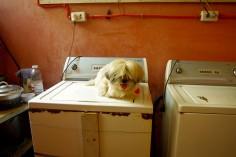 https://camerashyness.com/2013/11/12/day-316-puppy-love/