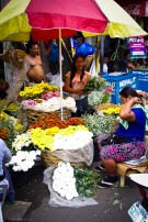 https://camerashyness.com/2013/12/04/day-338-the-florist/