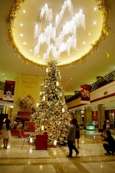 https://camerashyness.com/2013/12/24/day-358-oh-christmas-tree/